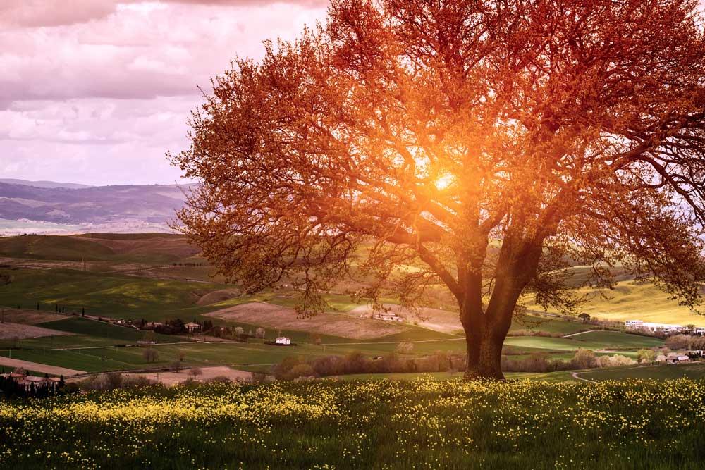 Fall time tree