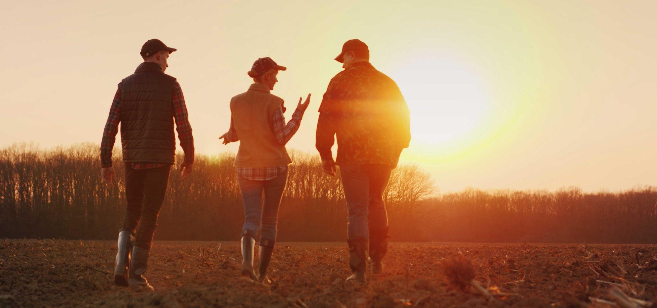 people walking through field at sunset